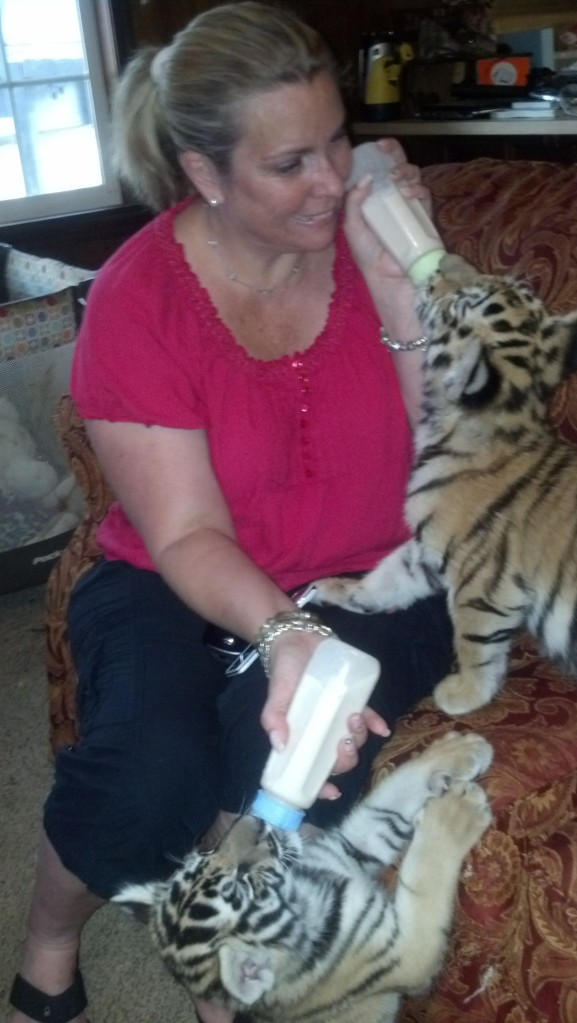 Anne feeding the baby tigers